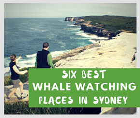 Best places for whale watching sydney