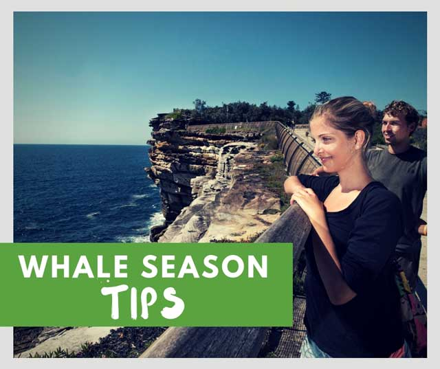 whale watching season sydney